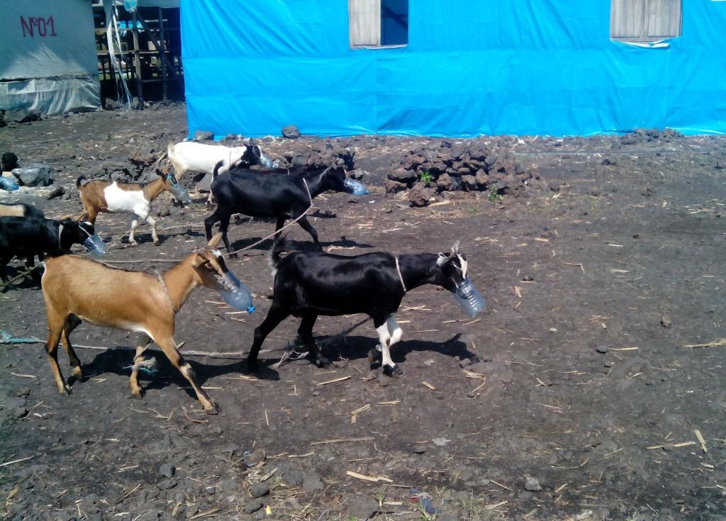 Photo prise dans le camp de Mungunga 1